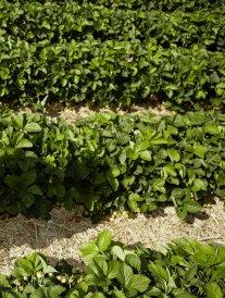 La cueillette : on va ramasser des fruits en famille !