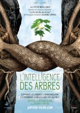 L'Intelligence des Arbres Cap'Cinéma Carcassonne Le Colisée Salles de cinéma