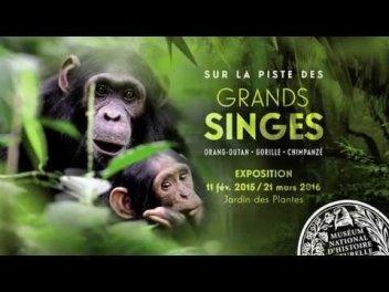 Exposition Sur La Piste Des Grands Singes Jardin Des Plantes