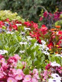 Quiz : saurez-vous reconnaître chacune de ces fleurs ?