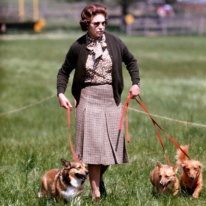 La reine Elizabeth II promène ses chiens lors de la Windsor Horse Trials dans les années 1980.