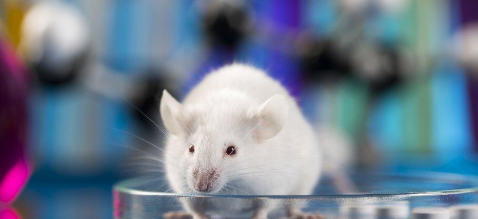Interdiction possible des produits testés sur les animaux hors UE