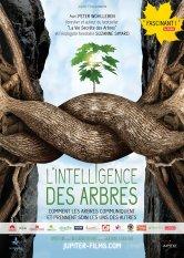 L'Intelligence des Arbres Ciné Saint-Leu Salles de cinéma