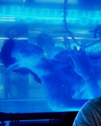 Avatar : Sam Worthington se confie sur les suites