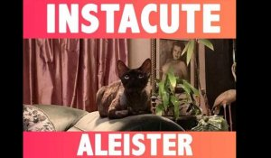 Aleister : Le chat star de Dita Von Teese !