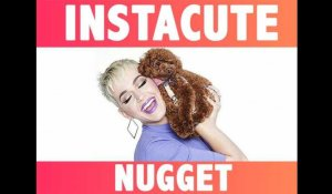 INSTACUTE : Nugget : Le chien star de Katy Perry !