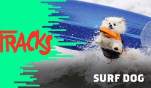 Surf Dog - Tracks ARTE