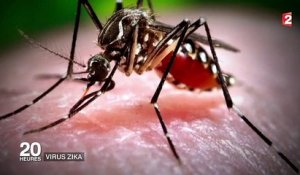Zika : une transmission possible par voie sexuelle