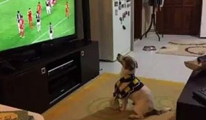 Le plus grand fan de Football est... un chien !