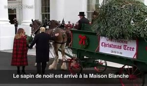 Le couple Trump accueille le sapin de noël