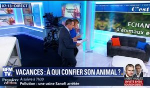 Vacances : à qui confier son animal ?