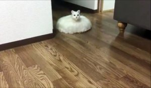 Voici le Chat Roomba