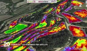 Vendanges : quand les images satellites assistent les vignerons