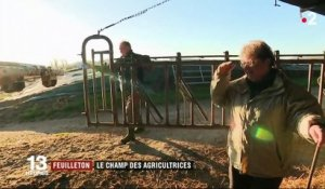 Feuilleton : le champ des agricultrices (1/5)