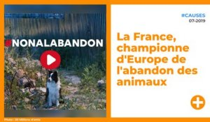 La France, championne d'Europe de l'abandon des animaux
