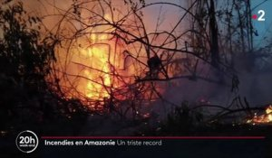 Incendies en Amazonie : un triste record