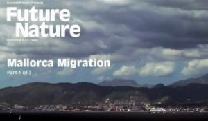 "Element Skateboarding - Future Nature ""Mallorca Migration"" Part 1 of 3"