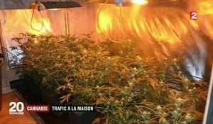 Cannabis : de plus en plus de producteurs en France