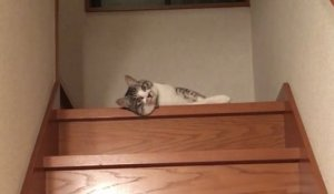 Un chat liquide descend un escalier