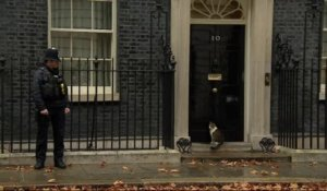En plein Brexit, Larry, le chat de Theresa May se retrouve à la porte