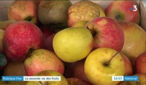 Initiative : la seconde vie des fruits