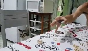 Tour de carte avec un chat