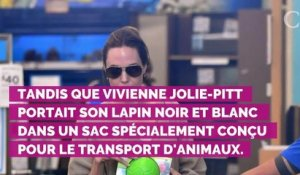 PHOTOS. Trop mignon ! Angelina Jolie a offert un adorable lapi...