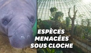 Au zoo de Beauval, la plus grande jungle de France ouvre ses portes au public
