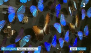 Bordeaux : une incroyable collection de papillons