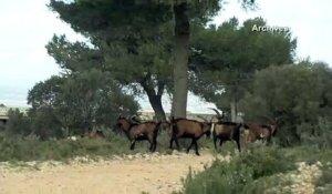 Info Route Le Secteur De Lavera Totalement Bloque Sur Orange Videos