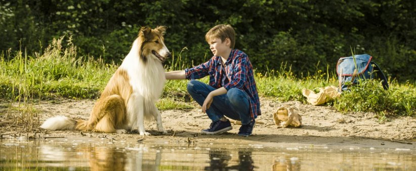 Lassie, La route de l'aventure : Photo