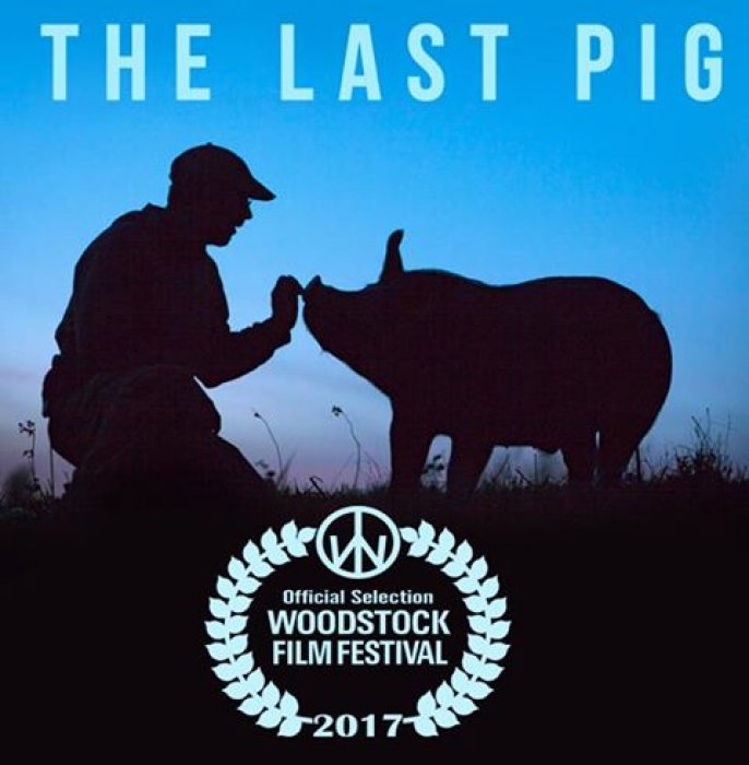 The last pig : Affiche