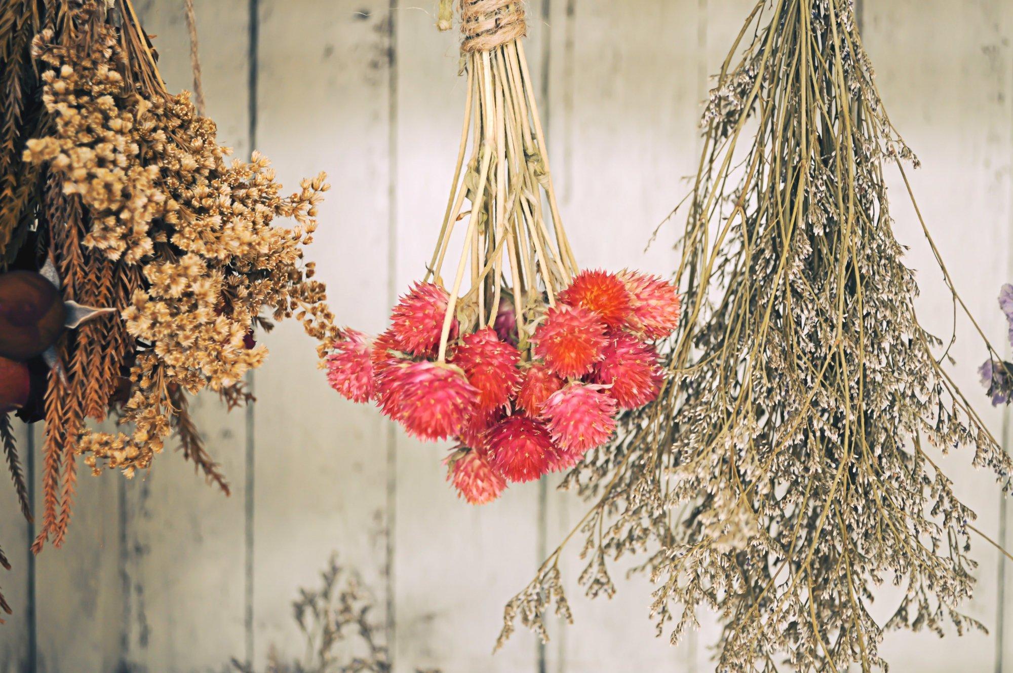 Comment Conserver Des Fleurs Séchées fleurs séchées : comment s'y prendre ?