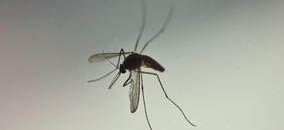 Grenoble : un cas de dengue détecté, une vaste opération de ...