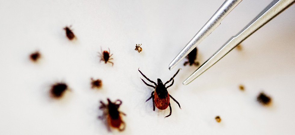 Maladie de Lyme : un collectif de 300 patients va porter plainte